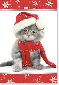 Christmas Card - May your Christmas be meowy and bright! | Minden Pictures | 73083 | Leanin' Tree