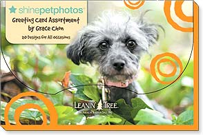 Boxed Greeting Cards - Shine Pet Photos - 90748 | Leanin' Tree