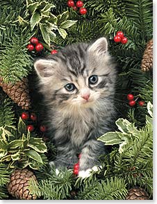 Christmas Note Card Sets - Have yourself a meowy little Christmas! - 92106 | Leanin' Tree