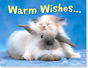 Easter Note Card Set - Warm wishes for a comfy Easter | Kimball Stock | 92169 | Leanin' Tree