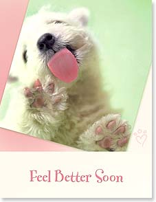 Get Well Card - I couldn't SEND a puppy to lick you so I photocopied one. - 97283 | Leanin' Tree