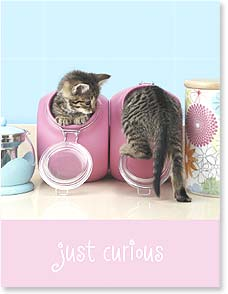Friendship Card - Just Curious | Wild-Side Brands Ltd | 97306 | Leanin' Tree