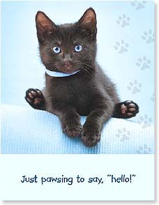 Hello Card - Pawsing to Say Hello! | Wild-Side Brands Ltd | 97323 | Leanin' Tree