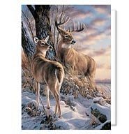 Wildlife Christmas Cards